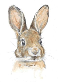 Drawn rabbit color Of with A4 Print by
