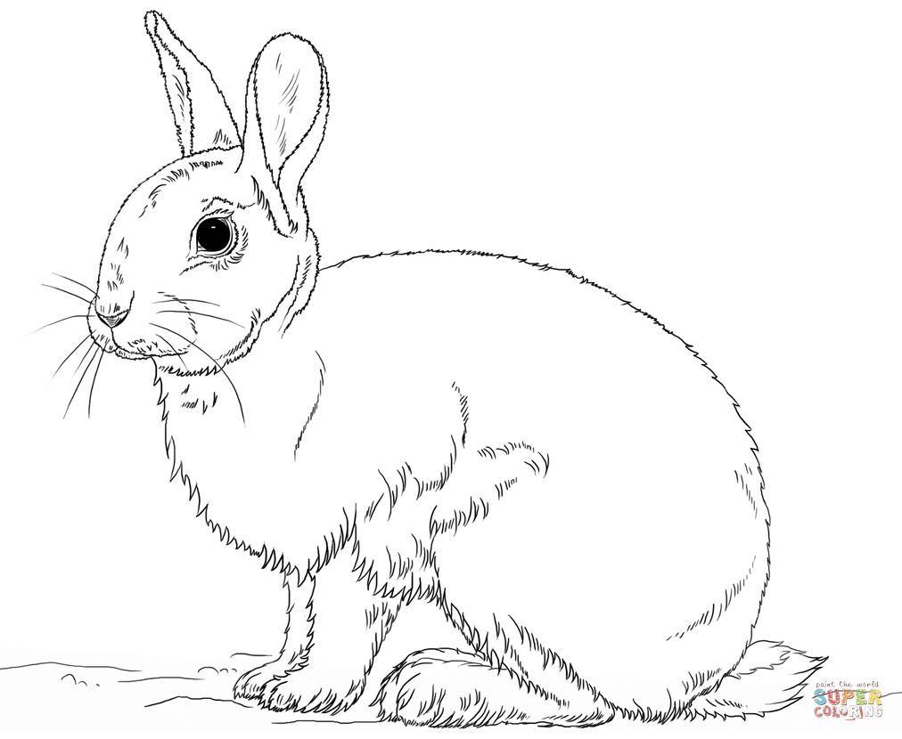 Drawn rabbit coloring page Coloring pages Cute Pages bunny