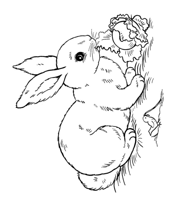Drawn rabbit coloring page This coloring  rabbit lettuce
