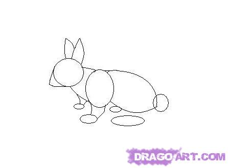 Drawn rabbit cottontail rabbit A step Animals draw