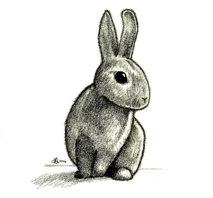 Drawn rabbit cottontail rabbit On 55 Pinterest bunnies best