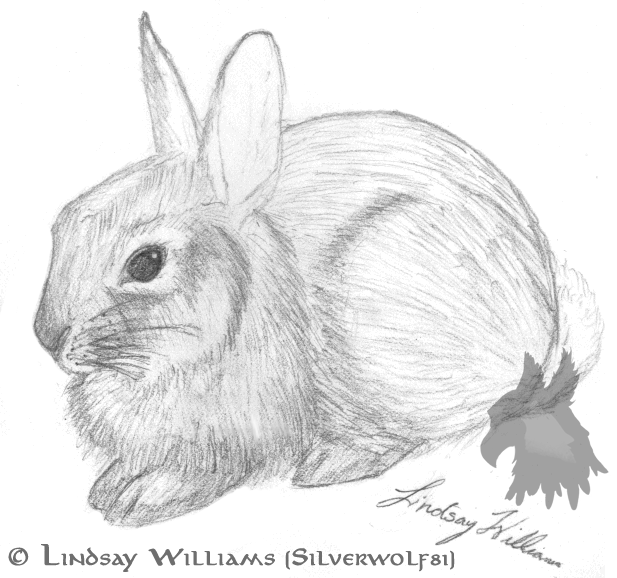 Drawn rabbit cottontail rabbit DeviantArt Cottontail on Rabbit silverwolf81