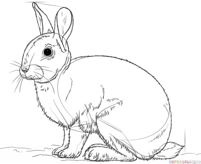 Drawn rabbid cottontail rabbit Rabbit draw the Drawing tutorials