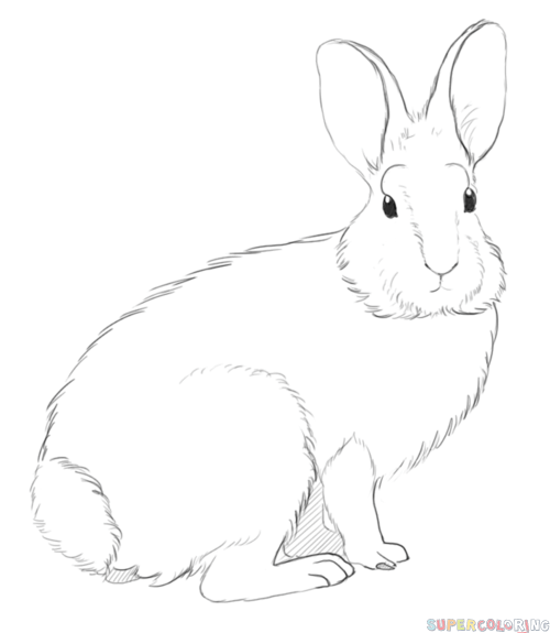 Drawn rabbit cottontail rabbit How Step by rabbit's Drawing