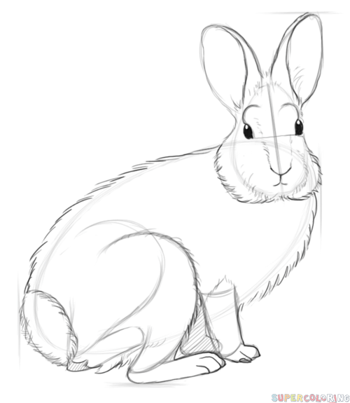 Drawn rabbit cottontail rabbit Drawing Nuttall's step How by