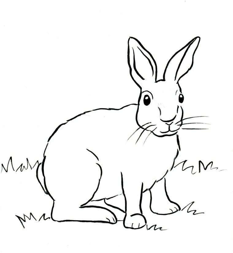 Drawn rabbit cottontail rabbit Coloring Coloring Bell Page Cottontail