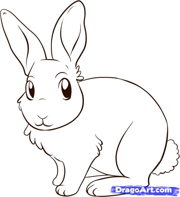 Drawn rabbit easy Drawing Easy A Square Drawing