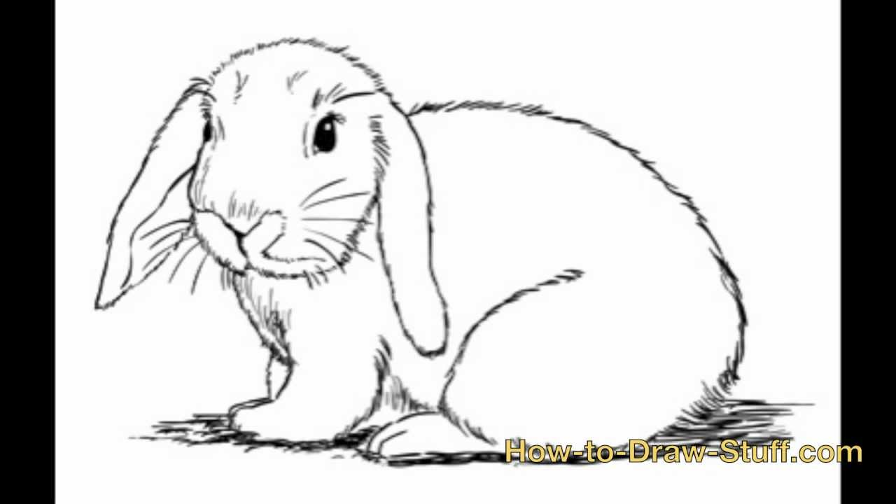 Drawn rabbit easy draw Step by YouTube How by