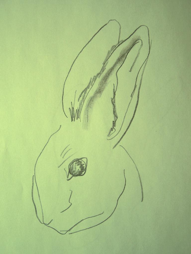 Drawn rabbit face How Hub Draw To Rabbit