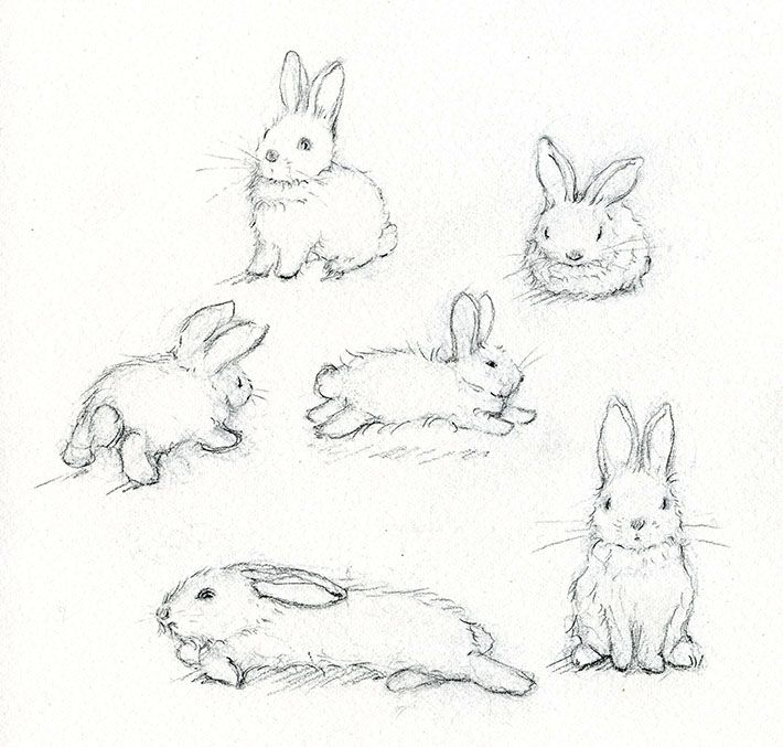 Drawn rabbit family drawing Realistic how draw to Google