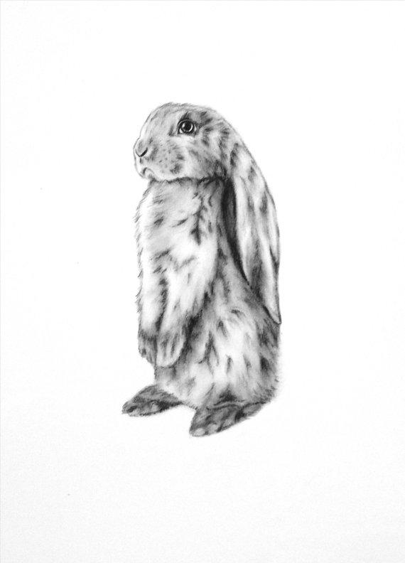 Drawn rabbit floppy eared bunny Rabbit Charcoal Bunny Art 5