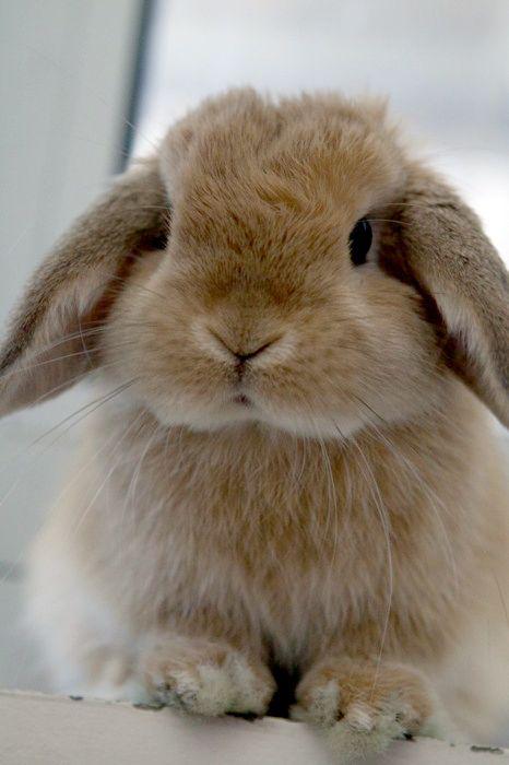 Drawn rabbit floppy eared bunny On more Holland Pinterest on