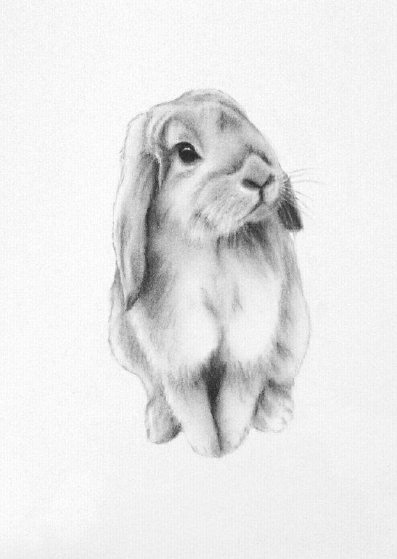 Drawn rabbit floppy eared bunny Charcoal Art Lop Bunny Bunny