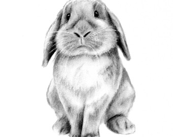 Drawn bunny floppy eared bunny Lop Drawing photo#10 Lop eared