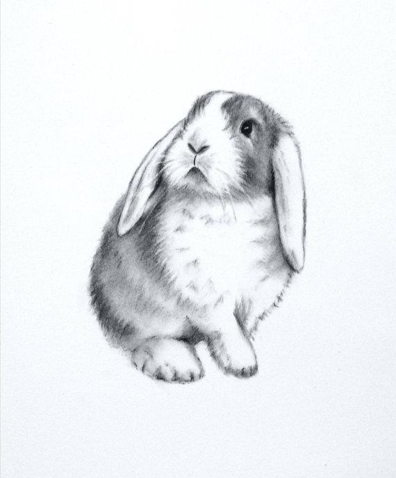 Drawn rabbit floppy eared bunny Art 5