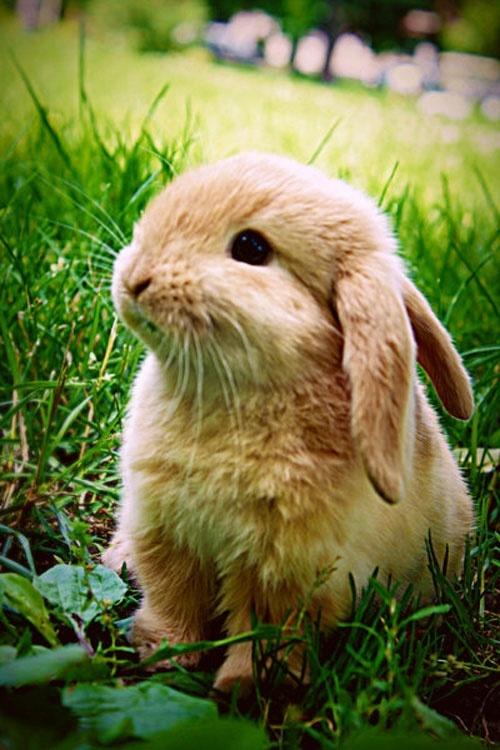 Drawn rabbid fluffy bunny Best images Bunny bunny rabbit