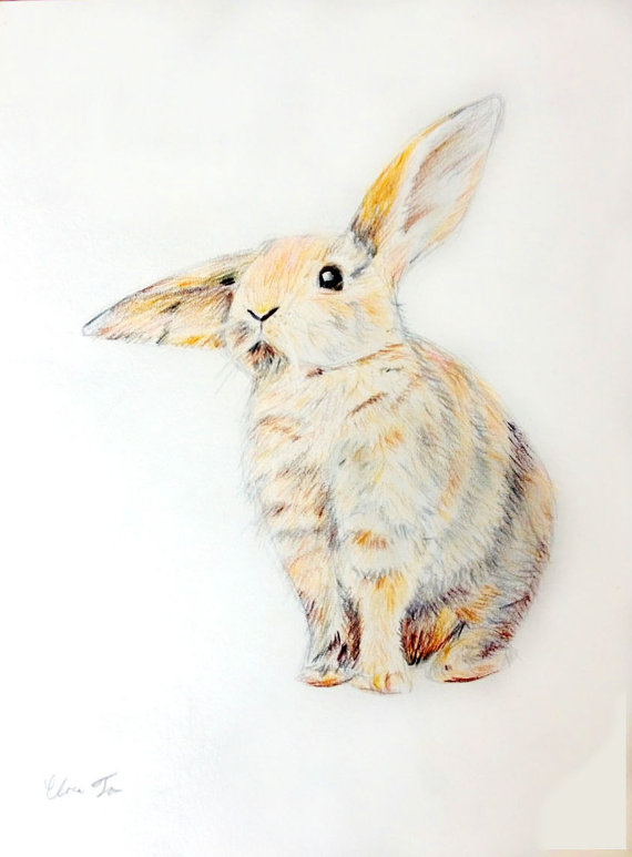 Drawn rabbit fluffy bunny Colored 00 $10 Fluffy Pencil