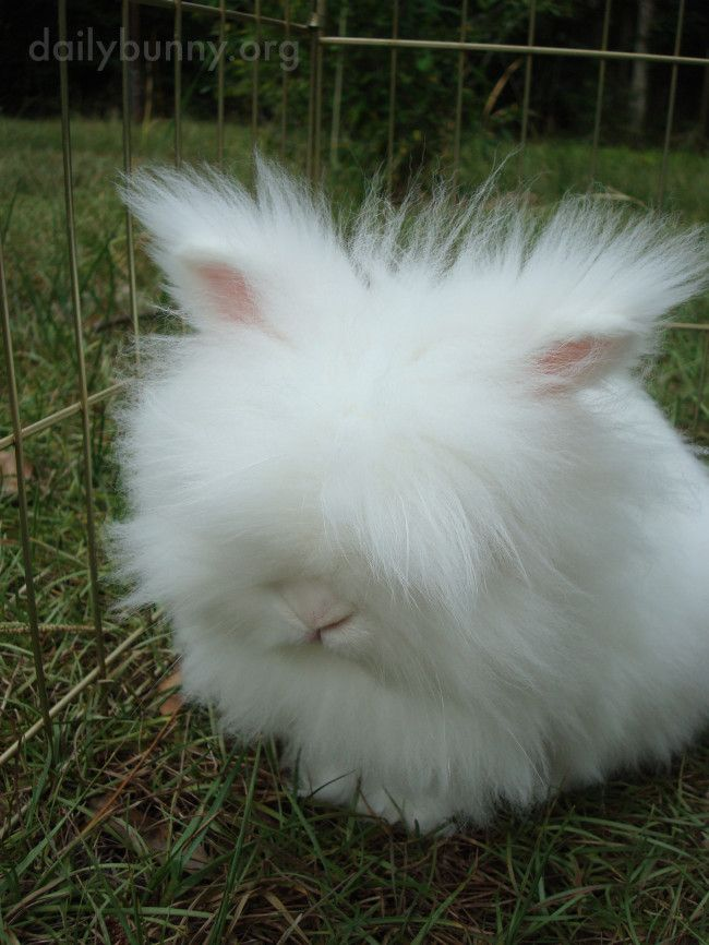 Drawn rabbit fluffy bunny Best 20+ Rabbit ideas on