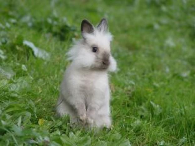 Drawn rabbit grassland animal  about Ireland in download
