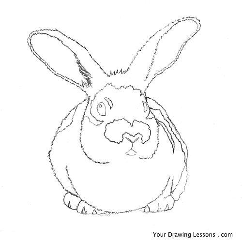 Drawn rabbit grassland animal Bunny Drawing Rabbit How A