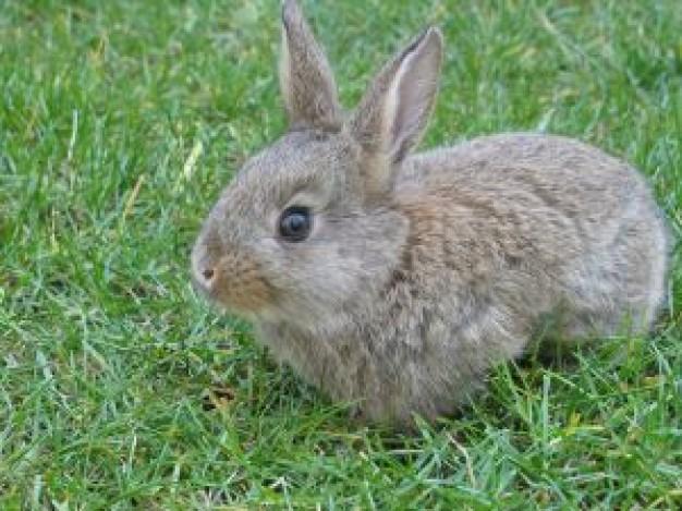Drawn rabbit grassland animal  bubus Holidays on Ireland