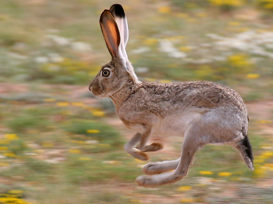 Drawn rabbit grassland animal Only feet But  in