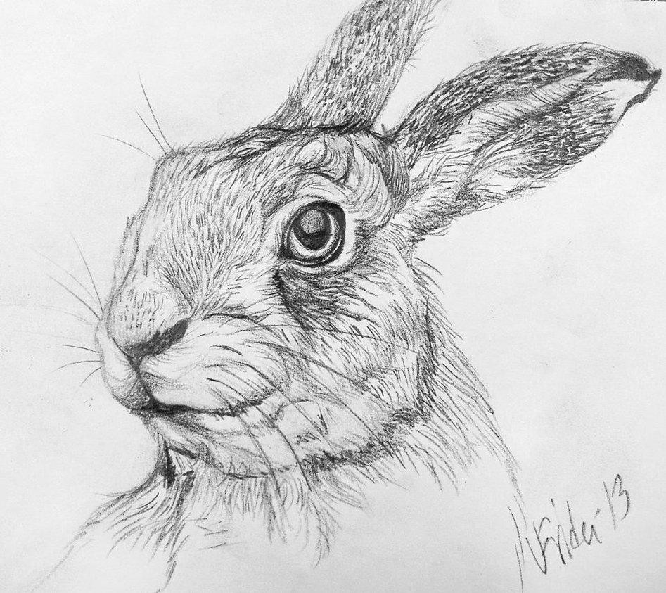 Drawn rabbit hare For Drawing For Jackrabbit Pics
