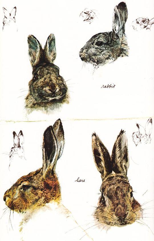Drawn rabbit hare & images 191 Rabbits rabbit