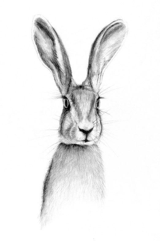 Drawn rabbit hare Bunny rabbit ideas rabbit art