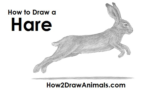 Drawn rabbit hare Hare a How Draw Draw