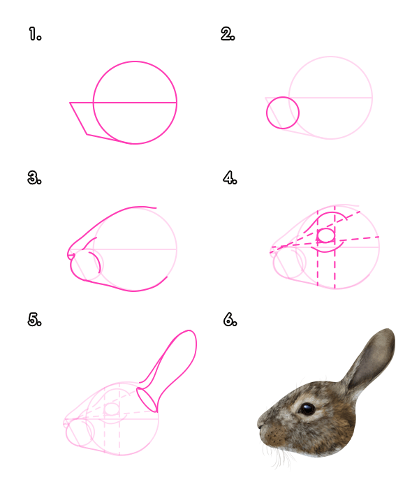 Drawn rabbit head Animals: Hares Rabbits to Head