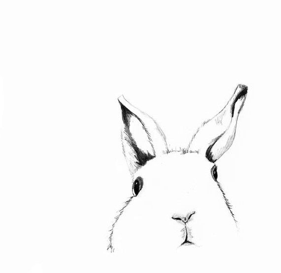 Drawn rabbit head Pinterest Wall hare images Where's