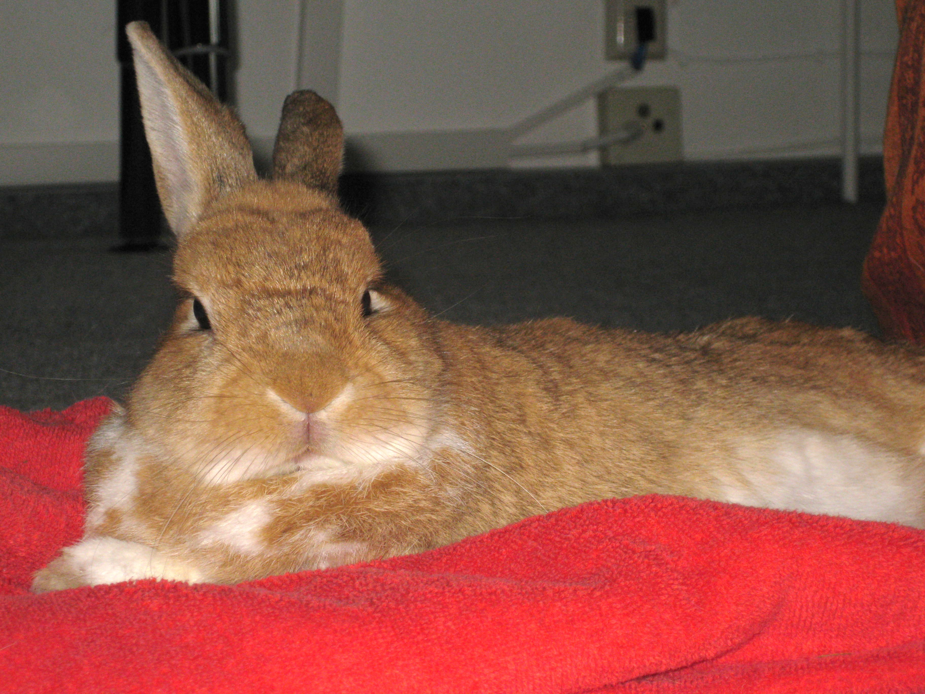 Drawn rabbit healing Lying by very Support on