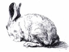 Drawn rabbit ink Drawing Pencil of Pinterest and