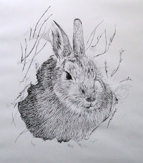 Drawn rabbit ink Rabbit on in and snow