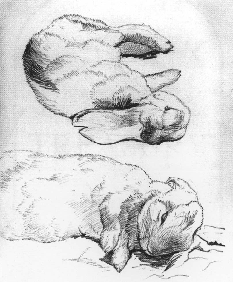 Drawn rabbit ink Picture Medical 2 Letters