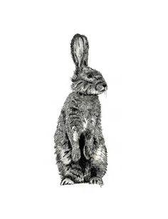 Drawn rabbit ink And white rabbit ink black