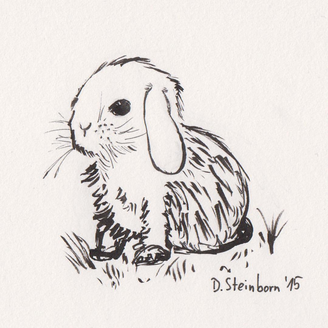 Drawn rabbit little rabbit Cute day 22: #inktober2015 #drawing