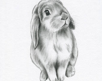 Drawn rabbit lop rabbit Bunny 5