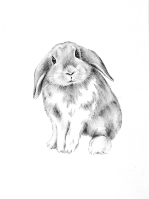 Drawn rabbit lop rabbit 5 sketch bunny Art 7