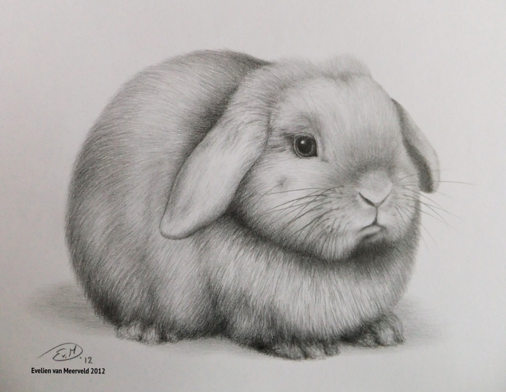 Drawn rabbit lop rabbit Lop EvelienVM88 Lop Hangoordwergje pencil