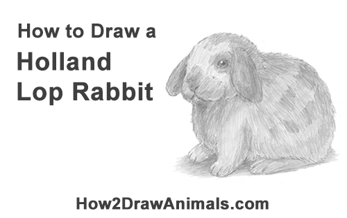 Drawn rabbit lop rabbit Draw a to Bunny Holland