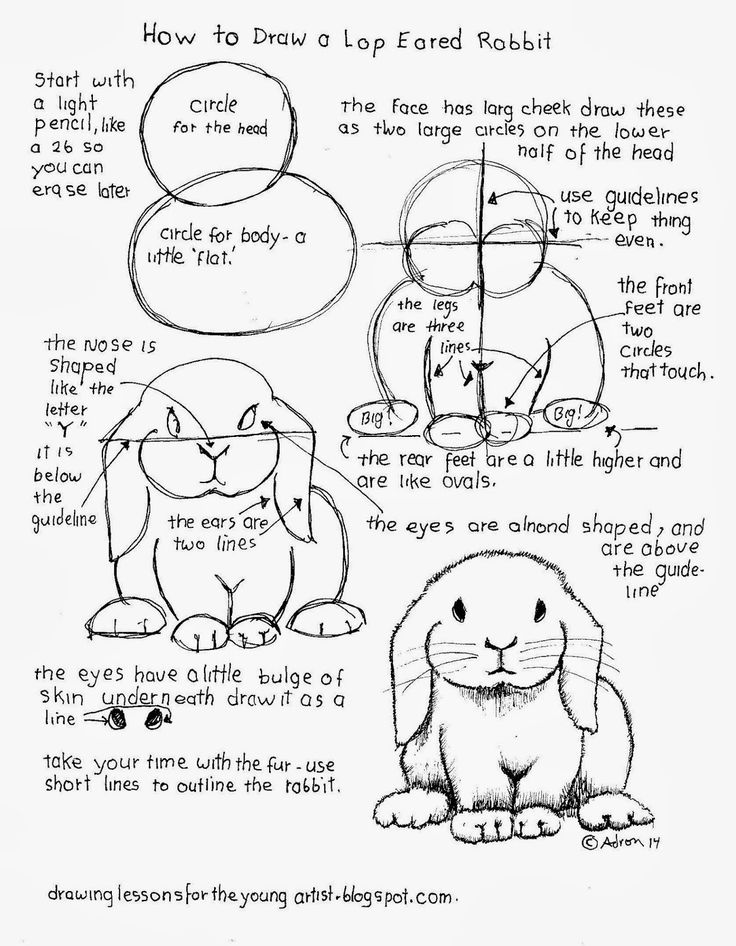 Drawn rabbit lop rabbit On To eared Worksheets bunny