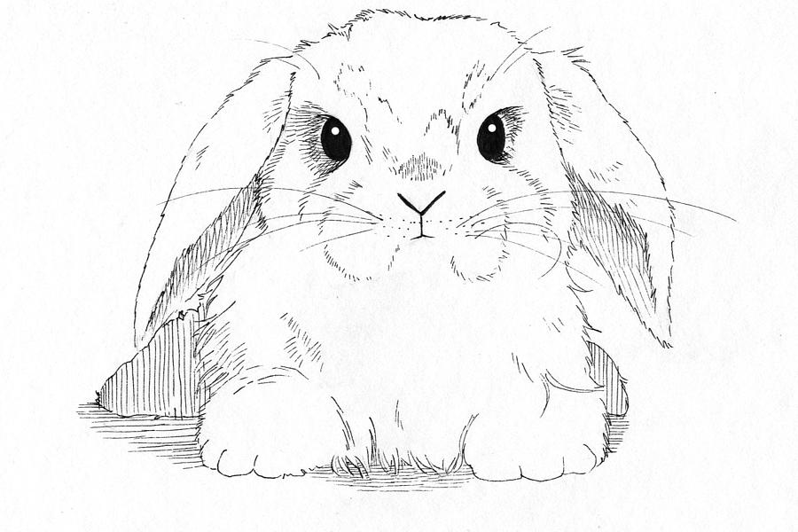 Drawn rabbid lop rabbit Pen Callan Drawing by Drawing