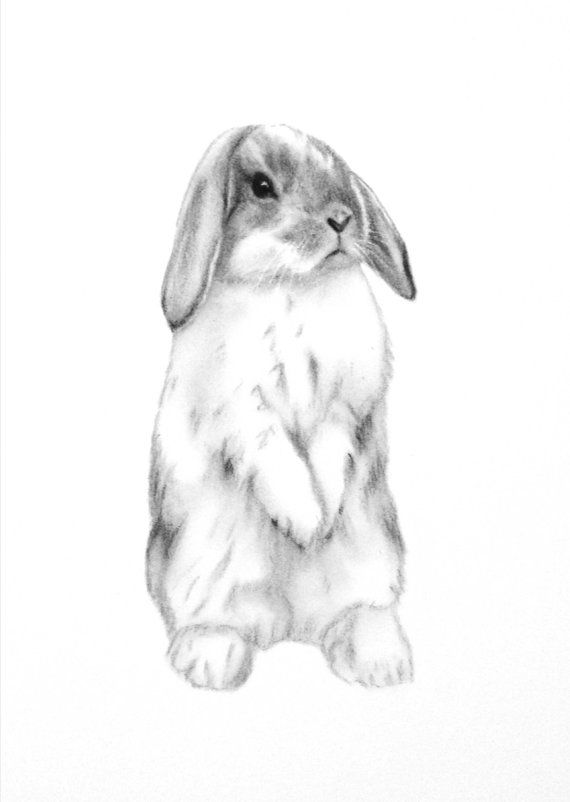 Drawn rabbid lop rabbit Rabbit Rabbit ideas ORIGINAL Lop