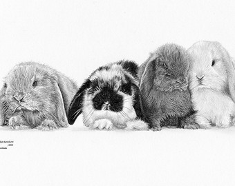 Drawn rabbit lop rabbit Print Bunny EARED Lop Etsy