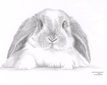 Drawn rabbit lop rabbit Signed Bunny EARED Lop Etsy
