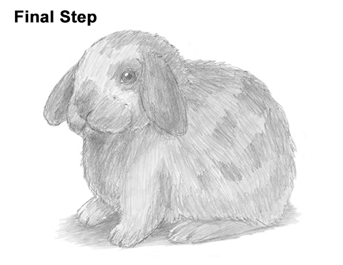Drawn rabbit lop rabbit Lop Rabbit Holland Draw How