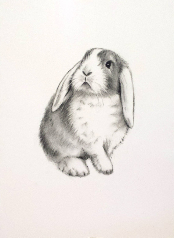 Drawn rabbit lop rabbit ORIGINAL Lop Bunny Sketch Charcoal