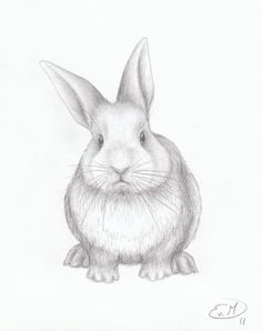 Drawn rabbit pencil To DRAWING BUNNY pictures …